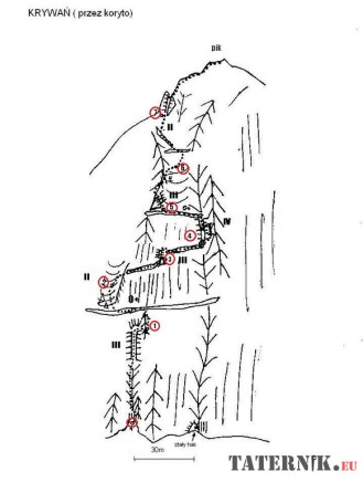 krywań z koryta topo